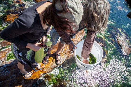 seaweed-4.jpg